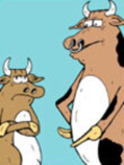 Birthday Cow  Humor