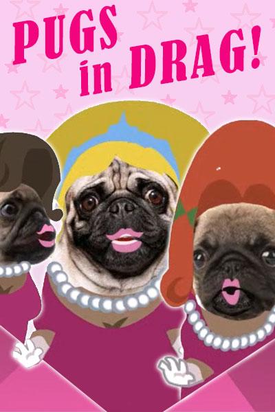 Pugs in Drag Birthday