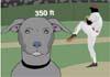 Talking Baseball Pooch