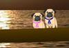 Pugs in Venice Anniversary ecard