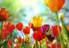 Easter Friendship