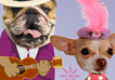 French Doggies for Grandma